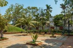绿色灌木,植物在庭院里,金奈,印度, 2017年4月01日 免版税库存图片