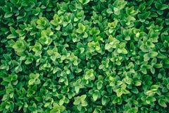 绿色灌木 无缝的Tileable 库存图片