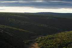 绿色灌木-野生生物公园 免版税库存图片