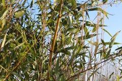 绿色灌木 图库摄影