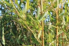 绿色灌木 免版税库存图片