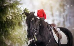 黑色炫耀在一个红色圣诞老人帽子的马马 免版税库存图片
