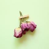 紫色烘干在绿色背景的玫瑰色花 免版税库存照片