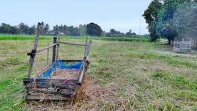 绿色烟草田和干燥干草 库存图片