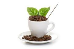 黑色烤阿拉伯咖啡咖啡豆 免版税库存照片