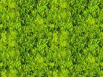 绿色热带叶子领域无缝的样式瓦片 免版税库存照片