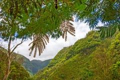 绿色热带森林谷 库存图片