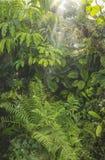 绿色热带背景雨林 免版税库存图片