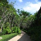 绿色热带 库存照片