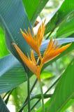 黄色热带 图库摄影