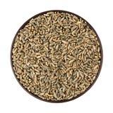 绿色燕麦五谷 免版税库存照片