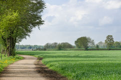 绿色燕麦 免版税库存照片