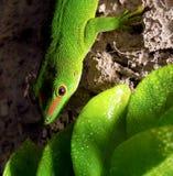 绿色爬行动物 免版税库存图片