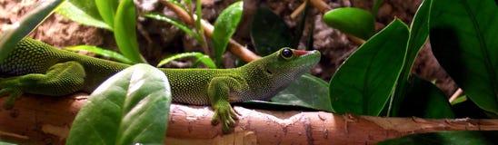 绿色爬行动物 免版税库存照片