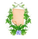绿色爬行植物和纸在白色背景 免版税库存照片