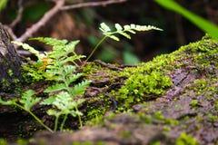 绿色爬行物植物 库存照片
