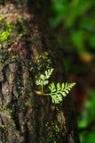 绿色爬行物植物 免版税库存图片
