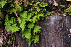 绿色爬行物植物 免版税图库摄影