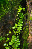 绿色爬行物植物 免版税库存照片