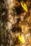 黄色爬行物 图库摄影