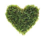 绿色爱 免版税图库摄影