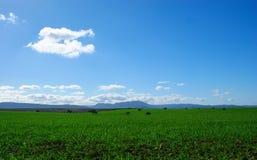绿色牧场地美好的风景有圣栎的 免版税库存图片