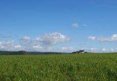 绿色牧场地美好的风景有圣栎的 免版税图库摄影