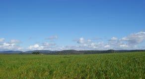 绿色牧场地美好的风景有圣栎的 图库摄影