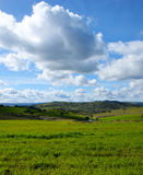 绿色牧场地美好的风景有圣栎的 库存照片