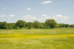 黄色牧场地 免版税库存照片