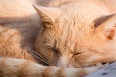 黄色猫是懒惰的 免版税图库摄影