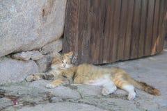 黄色猫- Behramkale, Assos,爱琴海村庄 免版税库存图片