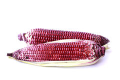 紫色玉米-储蓄图象 库存图片