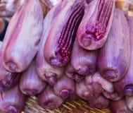 紫色玉米 库存照片