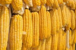 黄色玉米 免版税库存照片