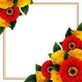 黄色玫瑰和红色百日菊属花的布置和框架 免版税库存图片