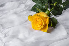 黄色玫瑰有水下落织品背景 免版税库存图片