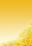 黄色玫瑰背景 库存图片