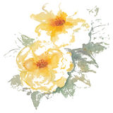 黄色玫瑰水彩传染媒介例证 免版税图库摄影