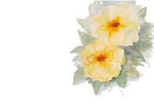 黄色玫瑰水彩例证传染媒介背景 免版税库存图片