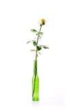 黄色玫瑰绿色花瓶 库存图片