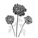 黑色玫瑰 免版税库存图片