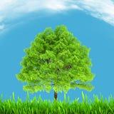 绿色环境和树在蓝天 免版税库存照片