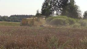 黄色现代组合收获麦子粮田和尘土上升 股票视频
