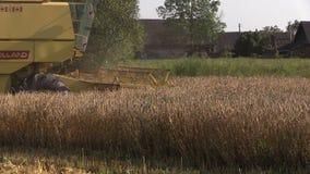 黄色现代组合收获麦子粮田在夏天 股票录像