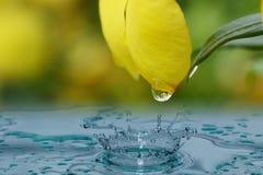 从黄色瓣的雨小滴 免版税库存照片