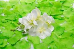 绿色瓣围拢的白色兰花 库存图片