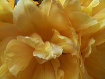 黄色瓣 图库摄影