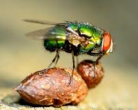 绿色瓶飞行 免版税库存照片