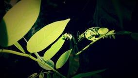 绿色生叶阳光 库存图片